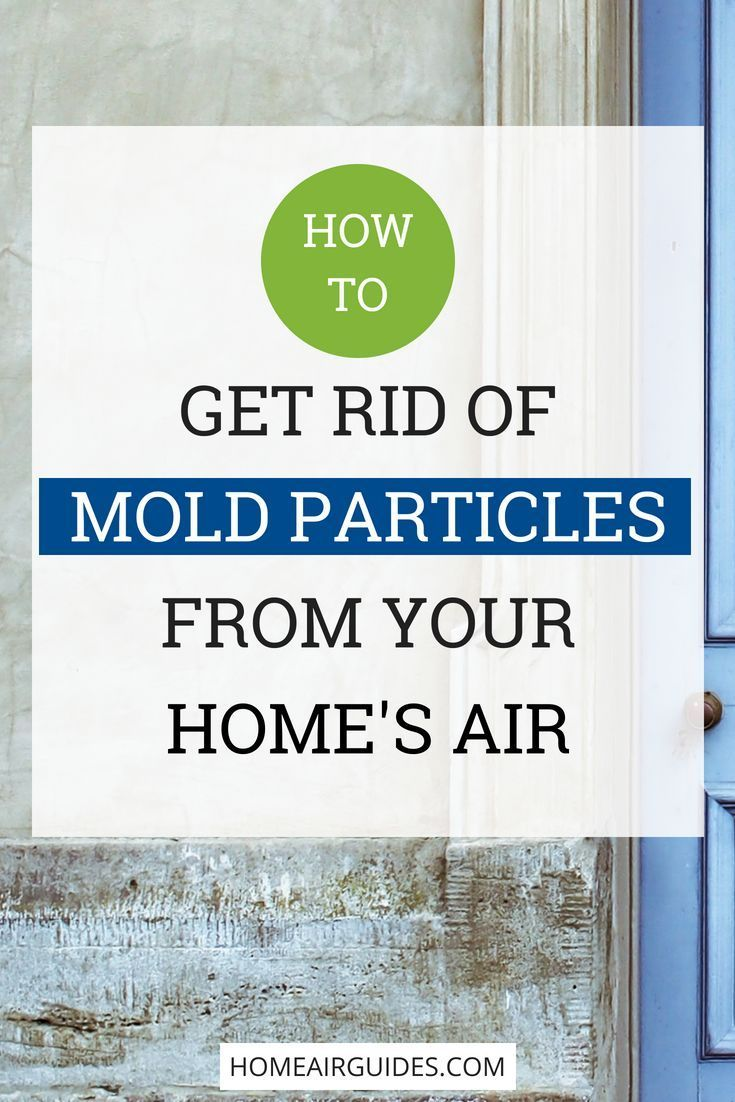Best Air Purifier for Mold Spores, Viruses & Mildew