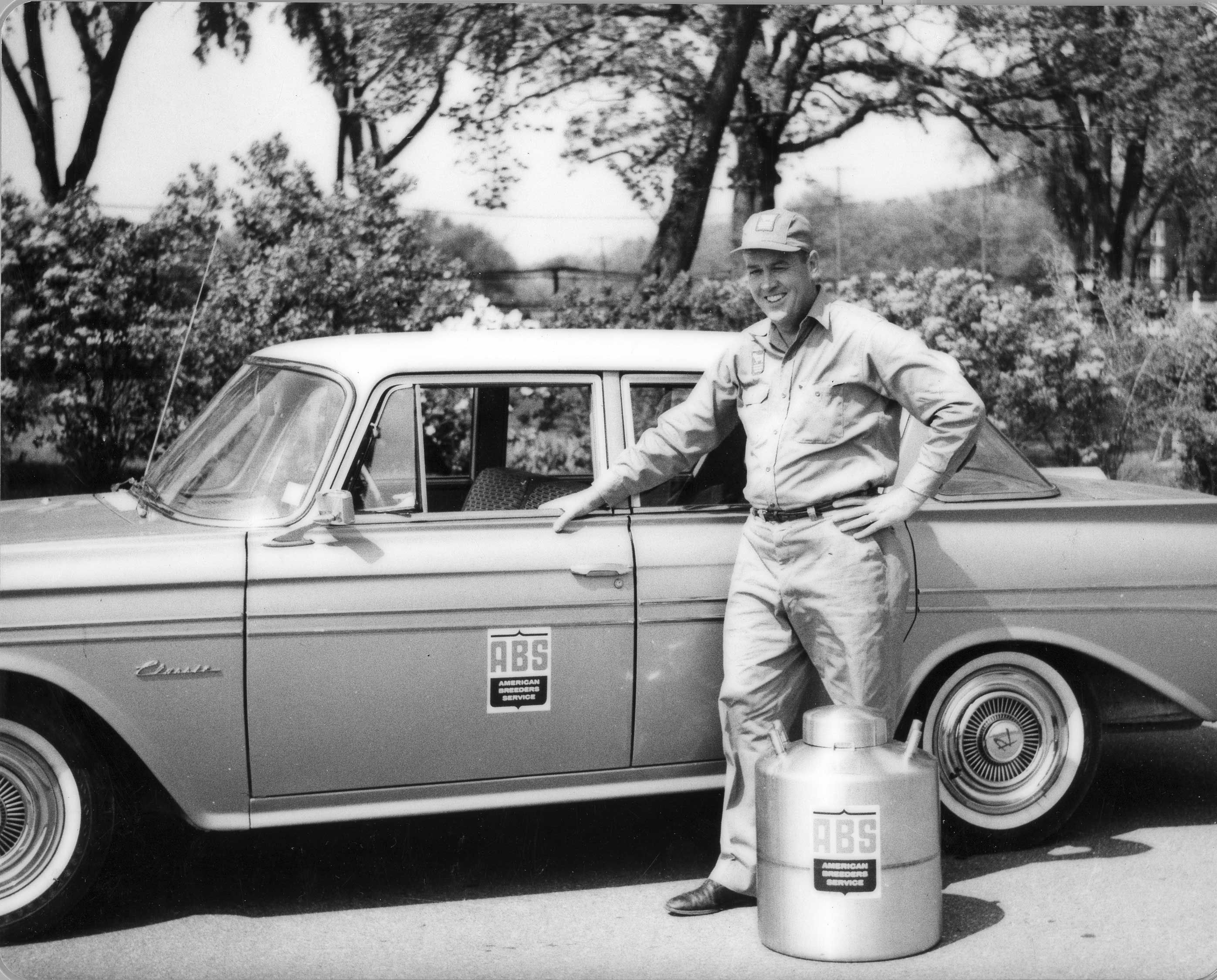 ABS Global Representative in the 1950s | History | Cow