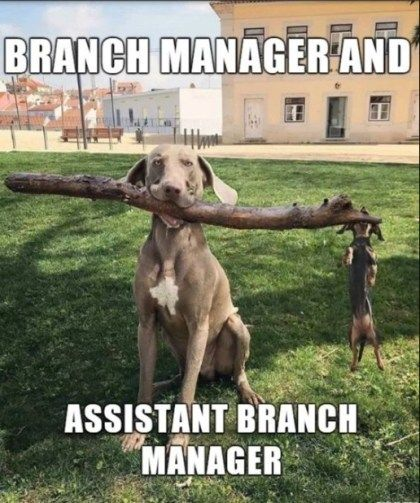 Manager And Assistant Branch Manager Dog Jokes Funny Dogs Funny Cat Pictures