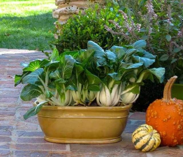 13 Fast Growing Vegetables For Containers Growing Vegetables In Containers Growing Vegetables Container Gardening Vegetables