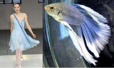 Fish Dresses