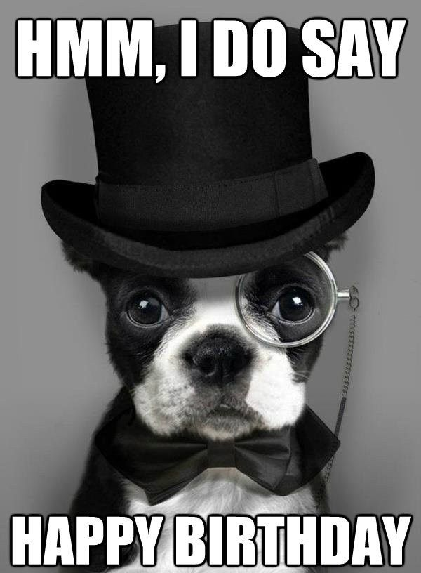 100 Ultimate Funny Happy Birthday Meme S My Happy Birthday Wishes Dapper Dogs Boston Terrier Terrier
