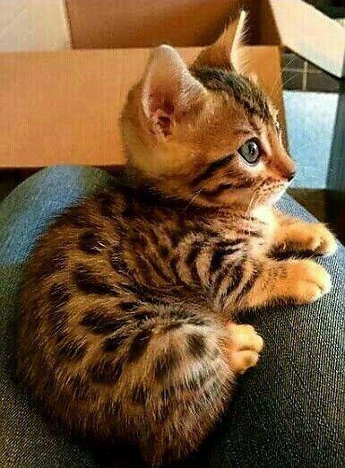 Sehr süß #cat #cat #Cat #very # sweet - Katzen #katzen #Sweet