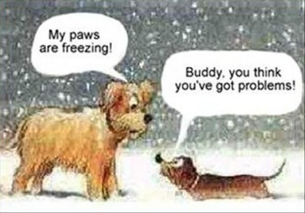 Buddy You Think Youve Got Problems Dogs Winter Snow Christmas