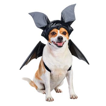 Potential Archie Halloween Costume Option 3 Animals Dog