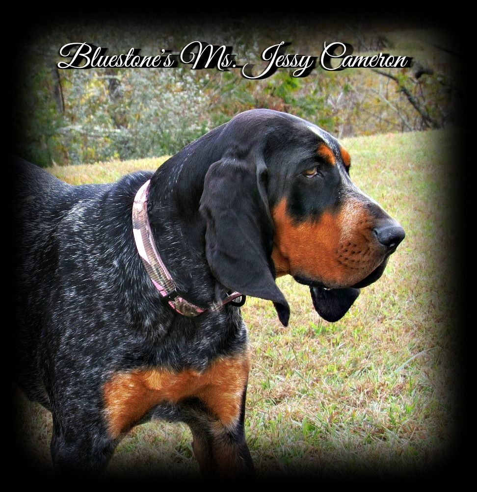 Bluestone Blueticks Has Quality Bluetick Coonhounds And Cameron