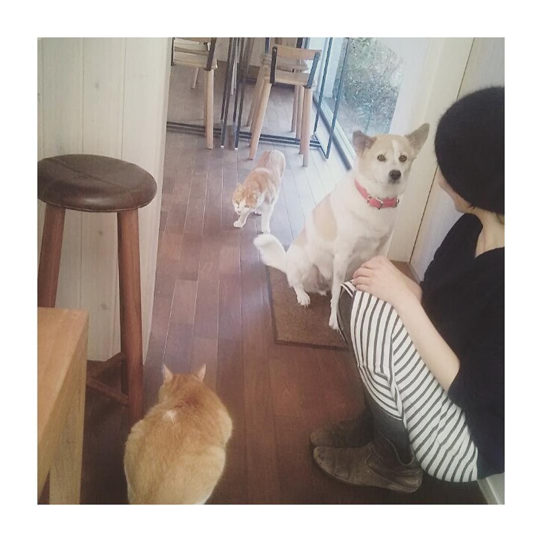 この間お出かけした時の写真にゃ 手前が僕で奥がこのお店の看板猫さんにゃ みんなお揃いの色してたよ 僕のアメブロにも写真載せたので見てみてにゃ by tomochunba