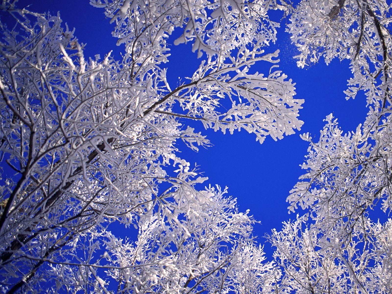 winter scenes Frosted trees winter scene free wallpaper