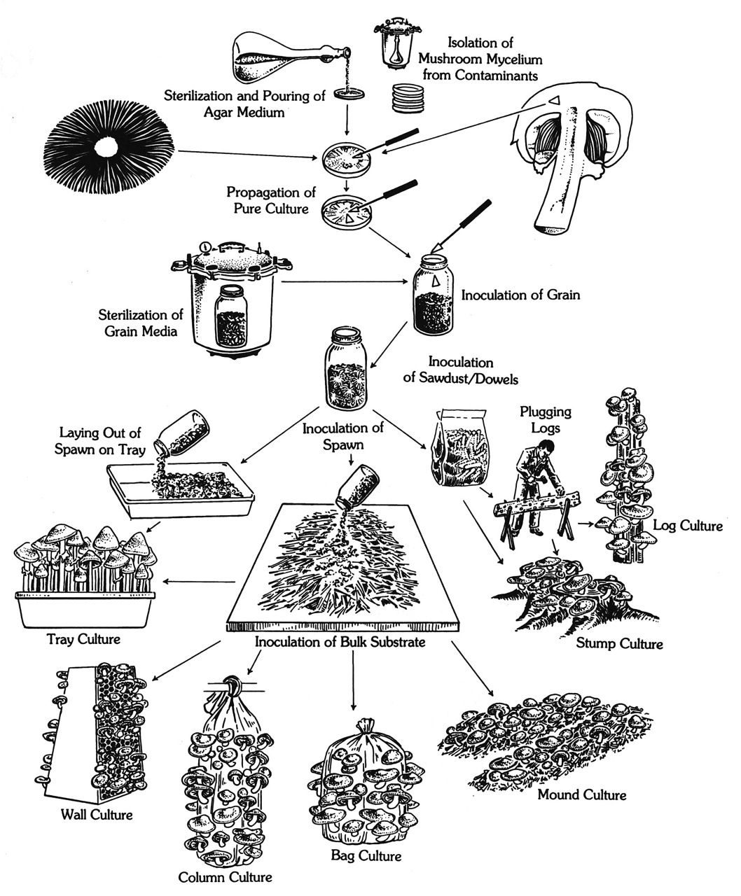 diagram from growing gourmet and medicinal mushrooms by paul