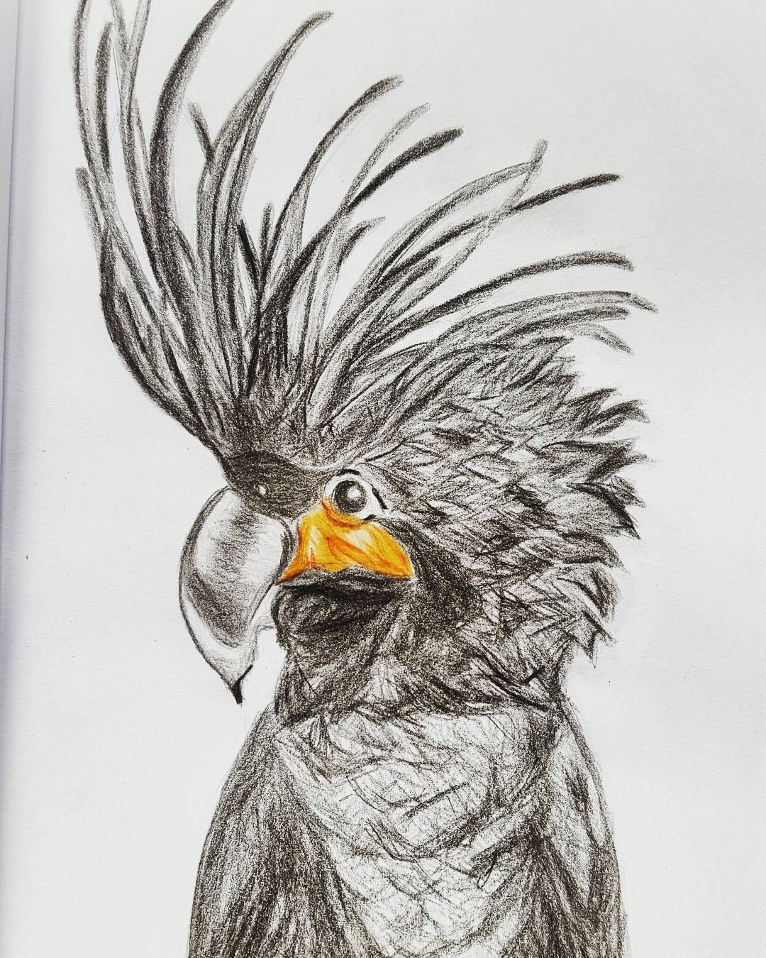 #cacatua #parrot #bird #pajaro #pájaro #feathers #animal #drawing #dibujo #art #arte #coloredpencil #colouredpencil #lapices #lapicesdecolores #realistic #tattoo #artwork #beautiful #artist #myart
