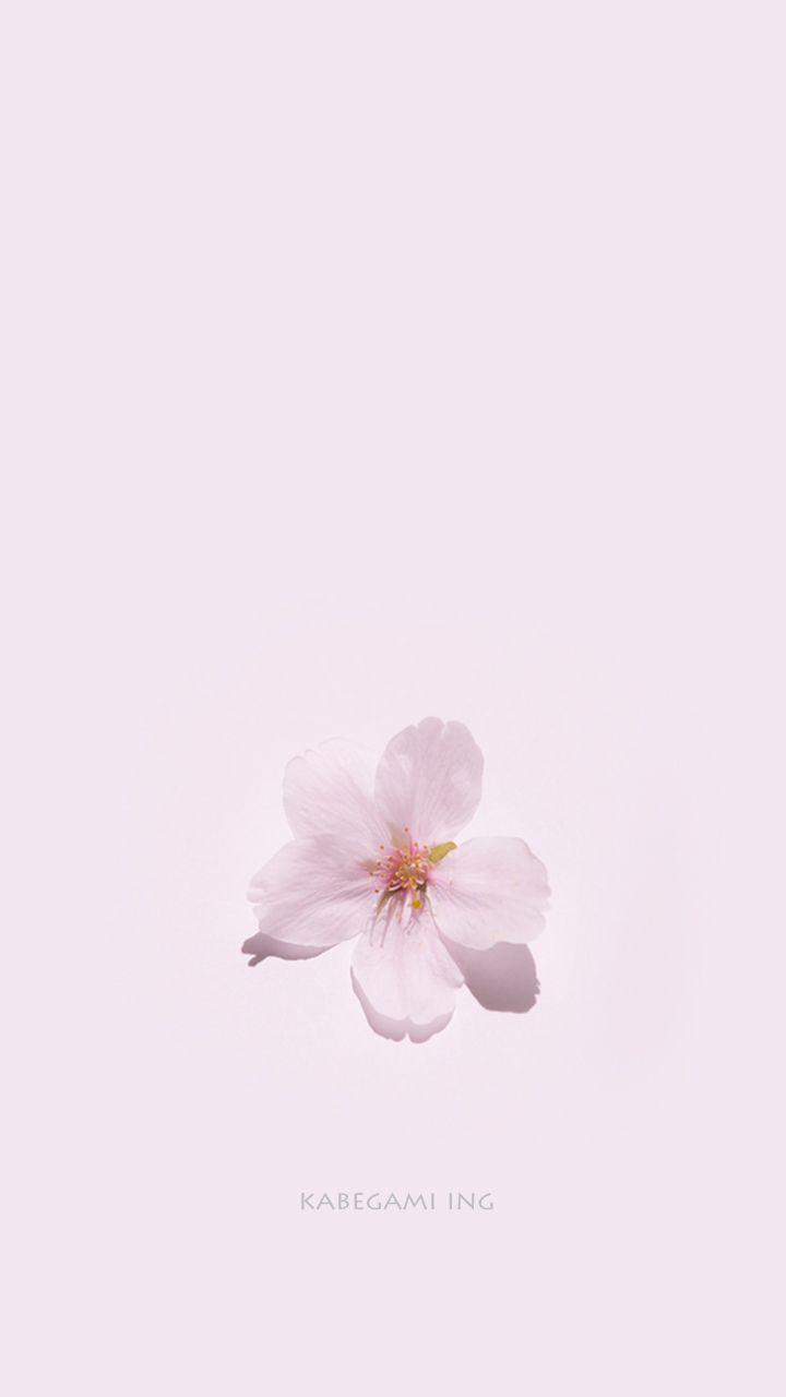 桜 スマホ壁紙 桜イラスト 桜 デザイン イラスト