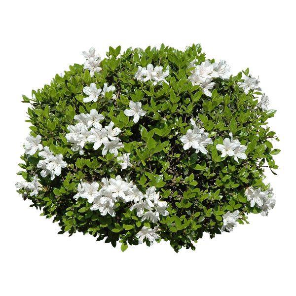 34 Png Photoshop Landscape Trees To Plant Landscape Materials