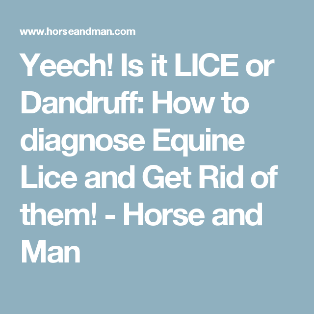 Yeech is it lice or dandruff how to diagnose equine lice and get is it lice or dandruff how to diagnose equine lice and get rid ccuart Images