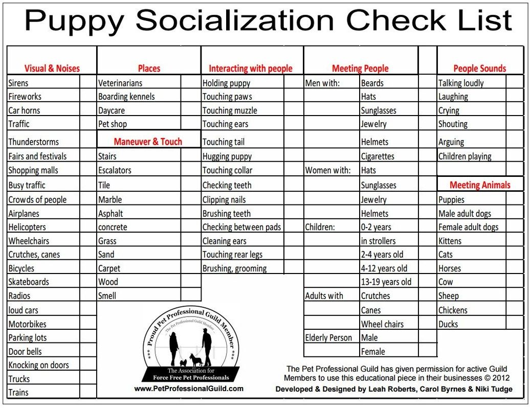 Puppy Socialization Check List With Images Puppy Socialization