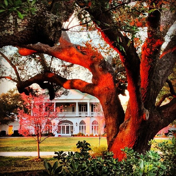 #LowndesGrove #HamptonPark #Charleston #SC Dunes