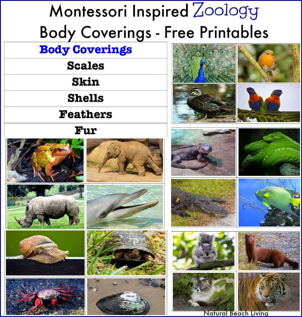 Montessori Inspired Zoology Body Coverings Free