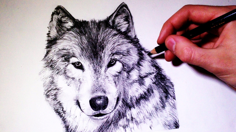 фото рисунок руками волк возле офиса бизнесмена