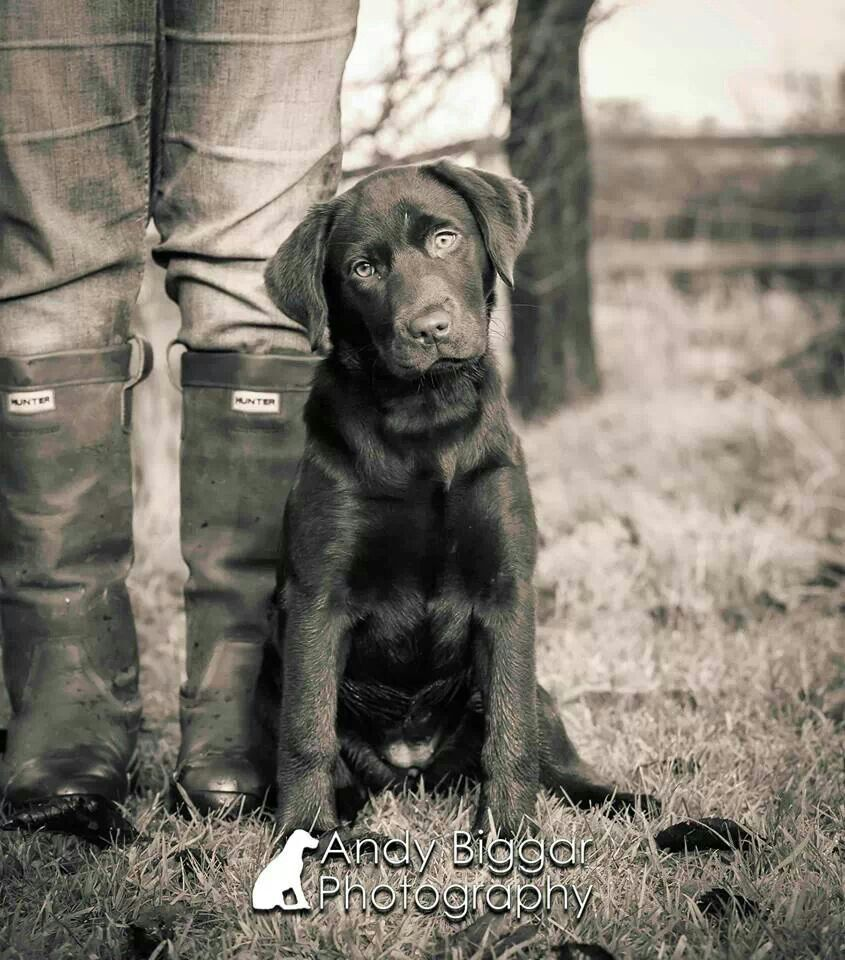 """Dog: """"My Master and I ~ Out in The Countryside.""""                                               (Andy Biggar Photography.)"""