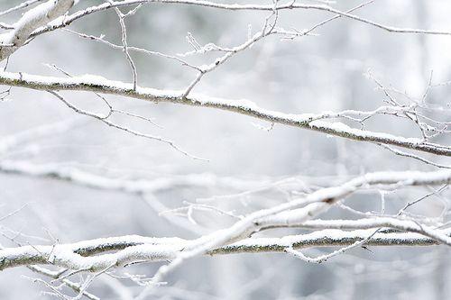 SNOW. SNOW. SNOW.
