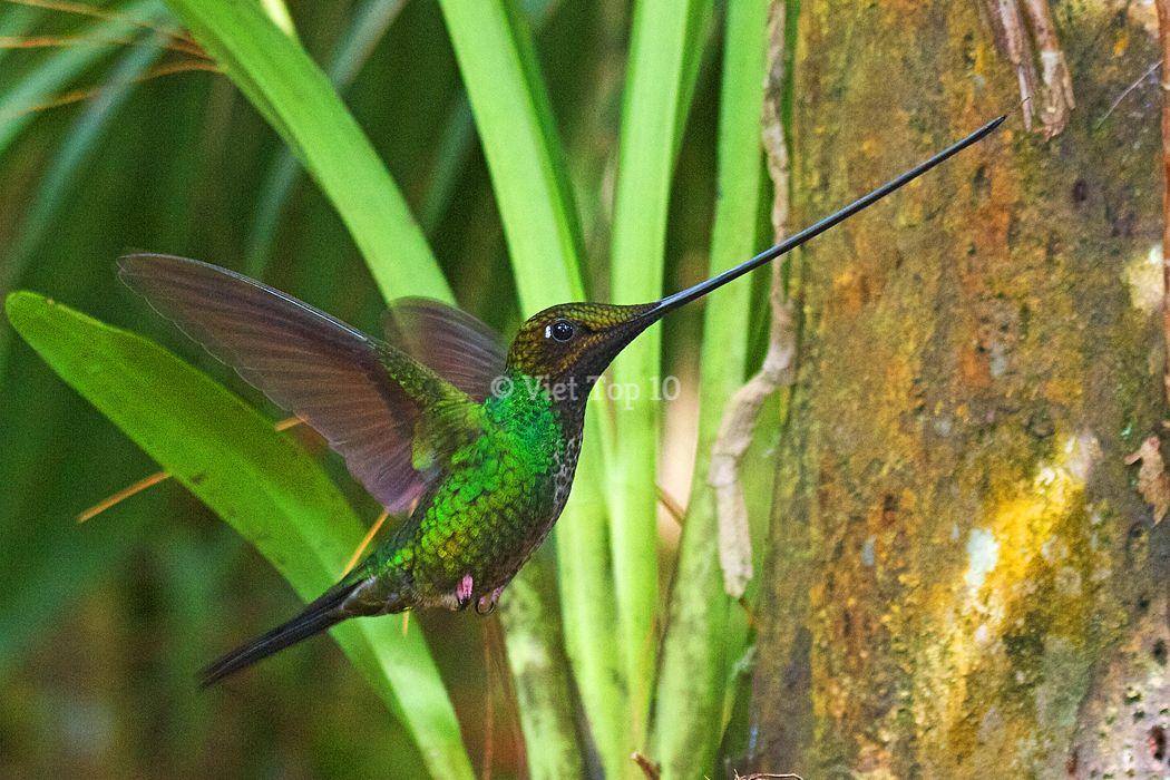 loài chim có chiếc mỏ quái dị nhất hành tinh - việt top 10 - việt top 10 net - viettop10