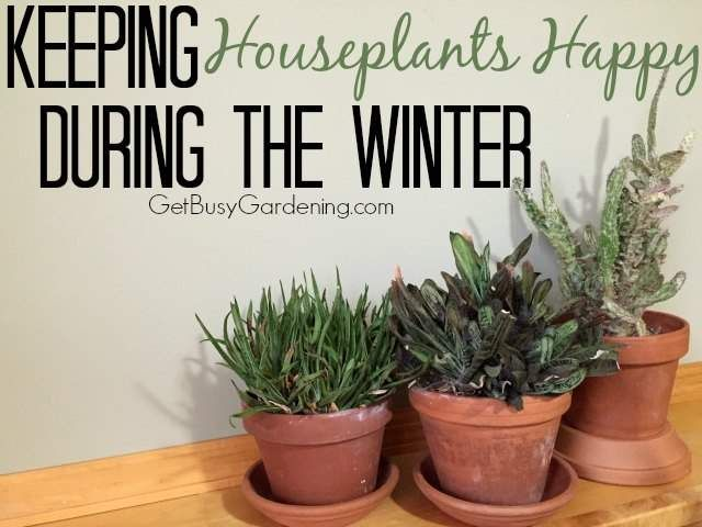 Keeping Houseplants Happy During The Winter | Get Busy Gardening! - Featured at the Hoe Matters Linky Party 122