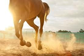Hooves Can Beat Youre Heart.