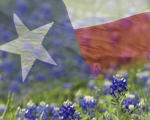 Texas Lone Star Flag With Texas State Flower The Bluebonnet Texas Bluebonnets Texas Gardening Blue Bonnets