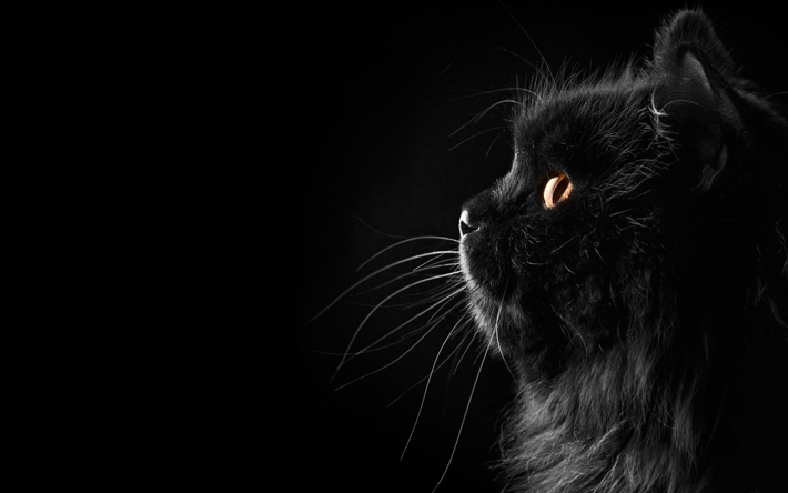 Download Wallpapers Persian Cat Black Cat Close Up Yellow Eyes Fluffy Cat Cats Domestic Cats Pets Persian Besthqwallpapers Com Fluffy Black Cat Cat Wallpaper Cats