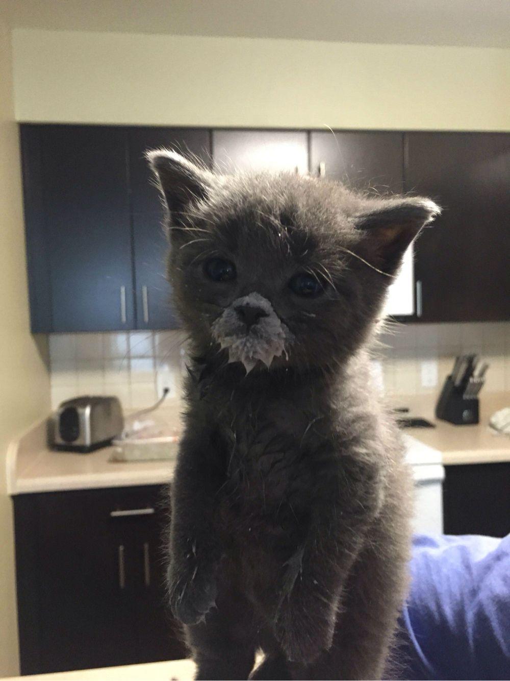 Kitten Milk Beard Kittens Cutest Cute Cats Cats And Kittens