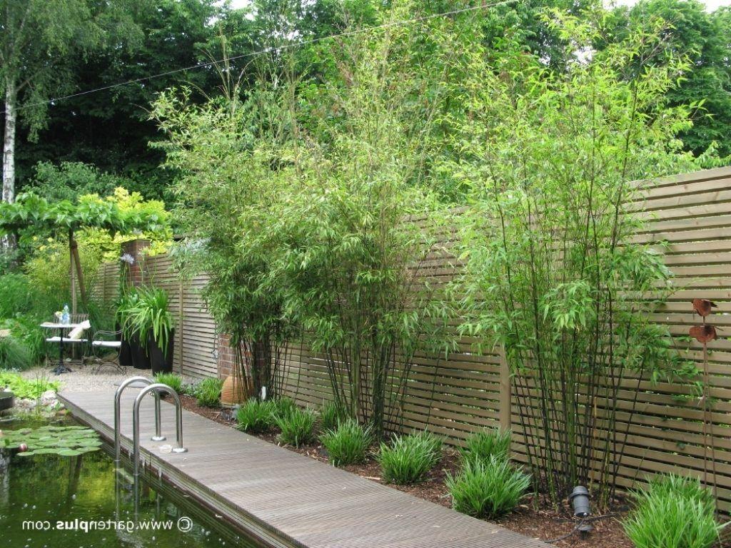 sichtschutz im garten mit pflanzen Sichtschutz garten