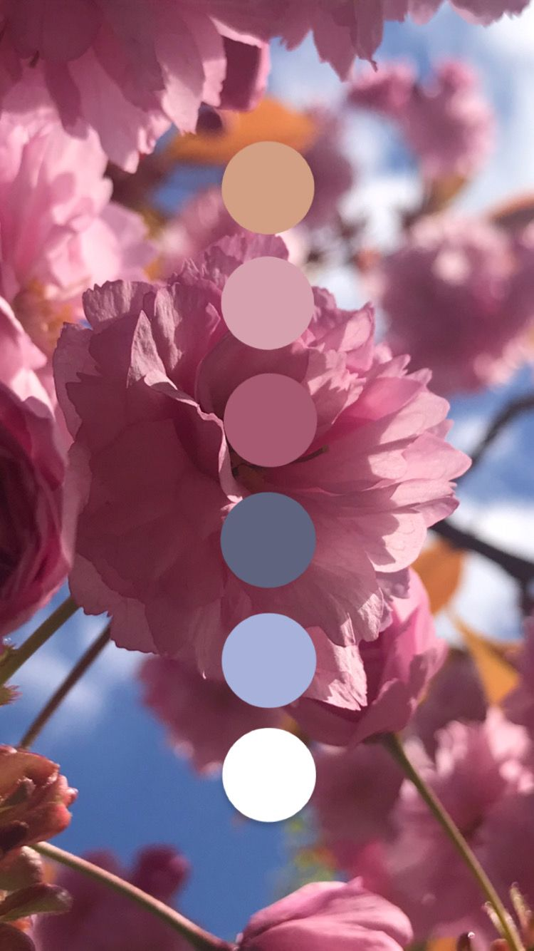 In love with Spring Pink Palette
