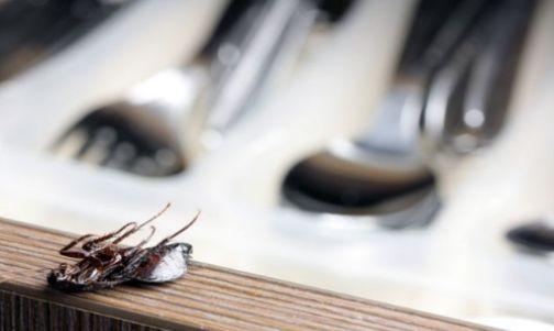 ¡Si en tu casa hay cucarachas, sigue estos consejos para eliminarlas!