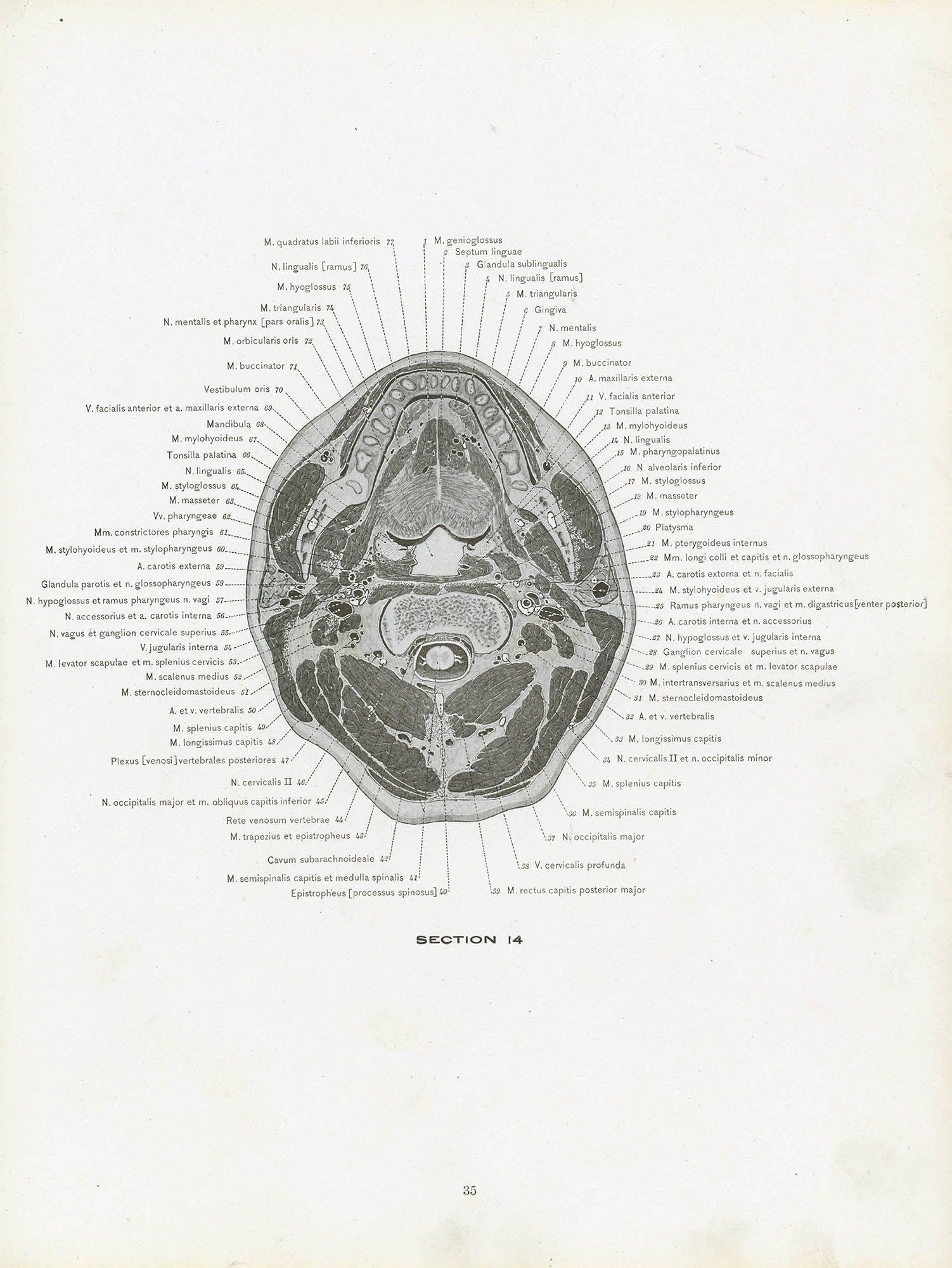 Schön Vagusnerv Anatomie Ppt Ideen - Physiologie Von Menschlichen ...