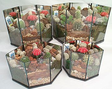 17 Best 1000 images about Terrarium Garden and mini greenhouse on