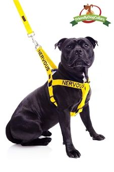 Nervous Dog Strap Harness Harnesses Pet Kiwi Buy Pet Supplies