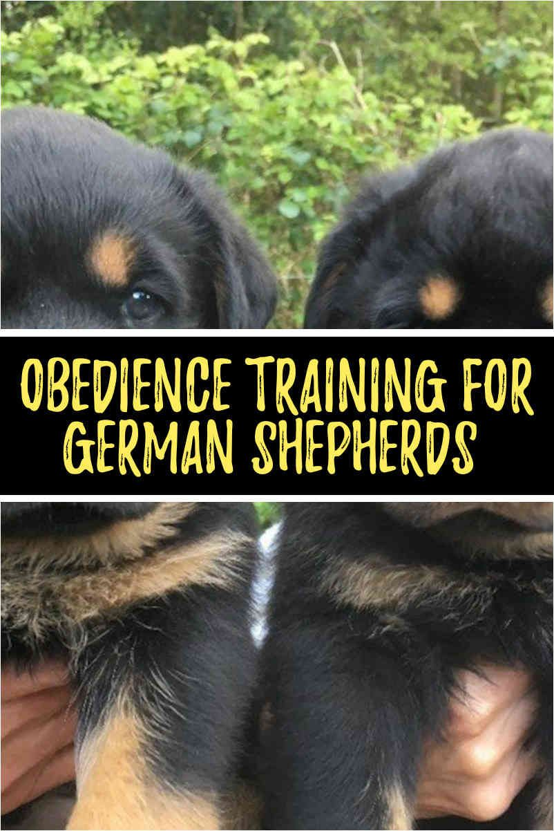 German Shepherd Prices What You Should Expect To Be Paying Dog