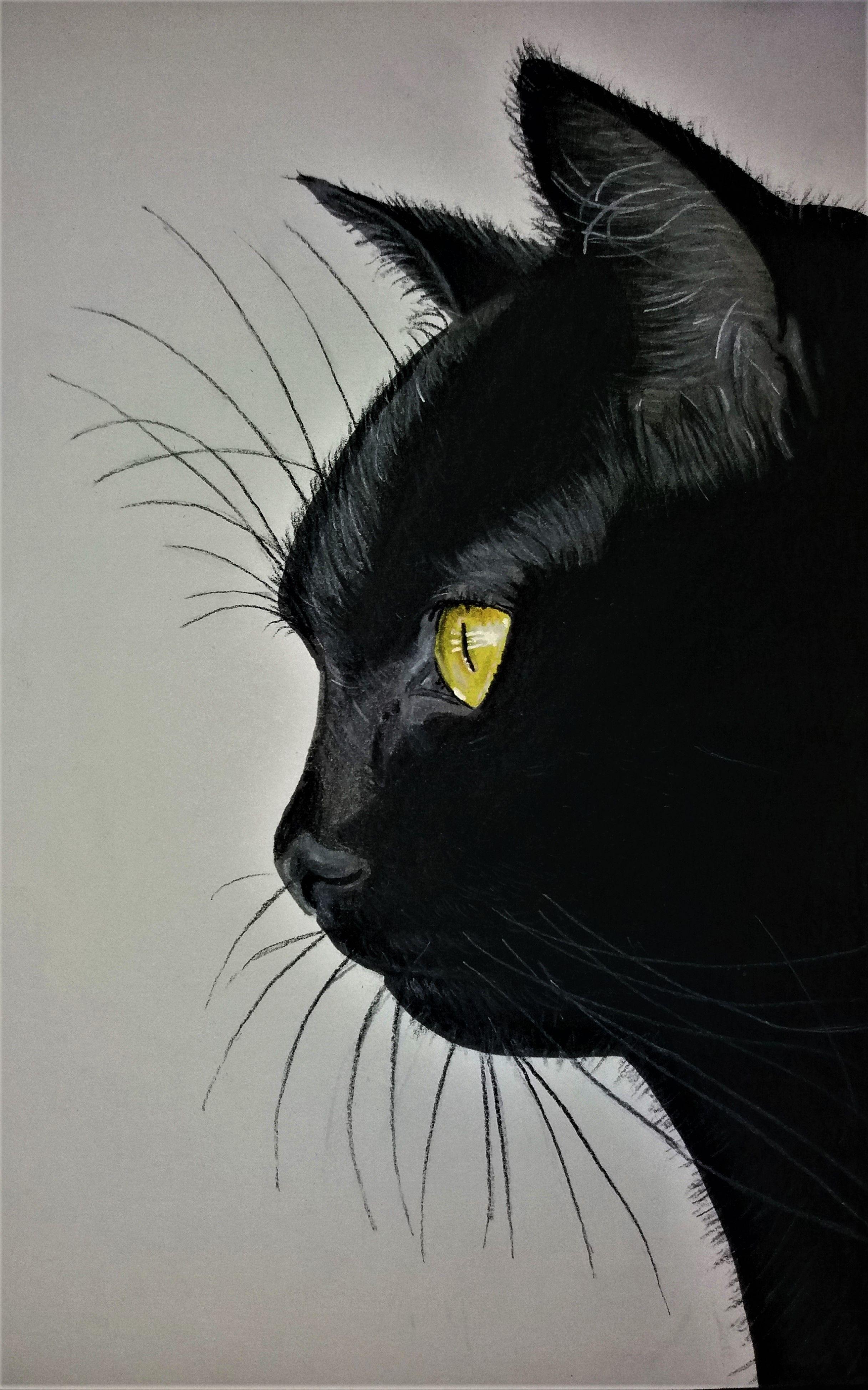 Chat Noir Promarker Et Pastel Sec Dessin Chat Dessin