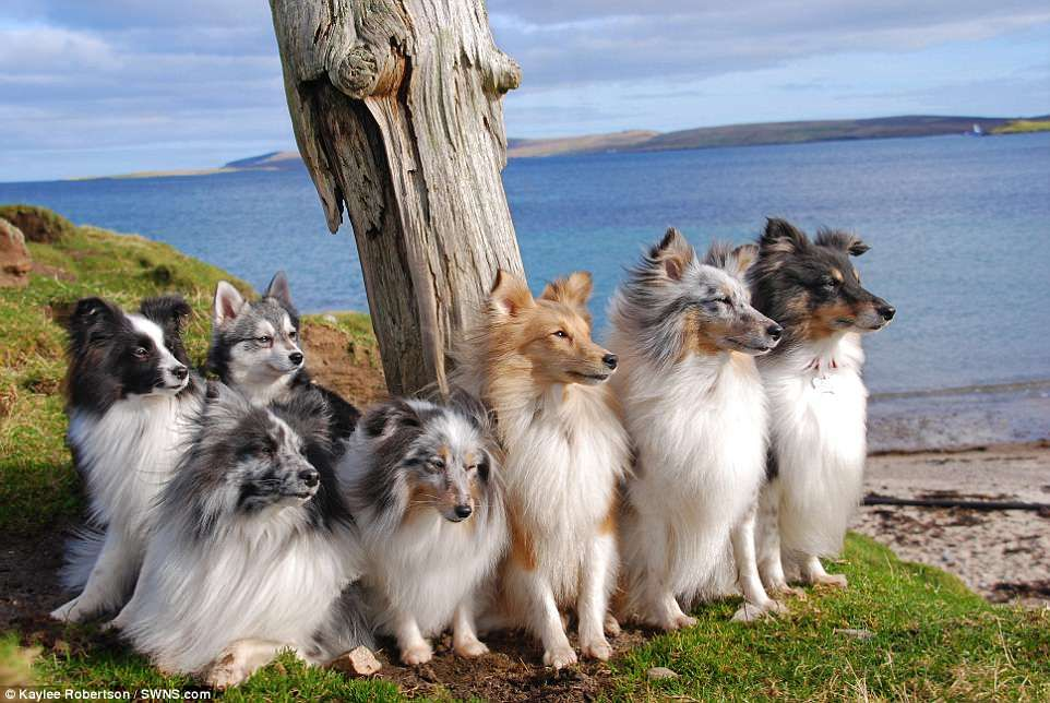 Dog owner reveals secret to getting her seven pets to pose