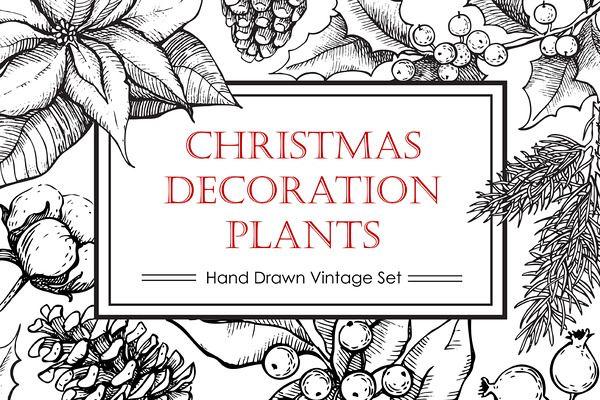 Hand Drawn Christmas Plants.