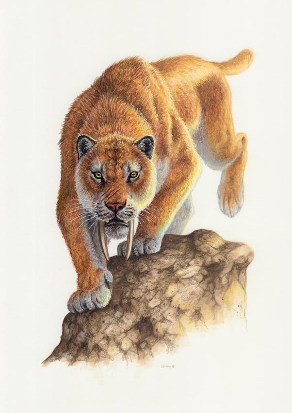 Smilodon By Esther Van Hulsen Smilodon Extinct Animals Prehistoric Animals