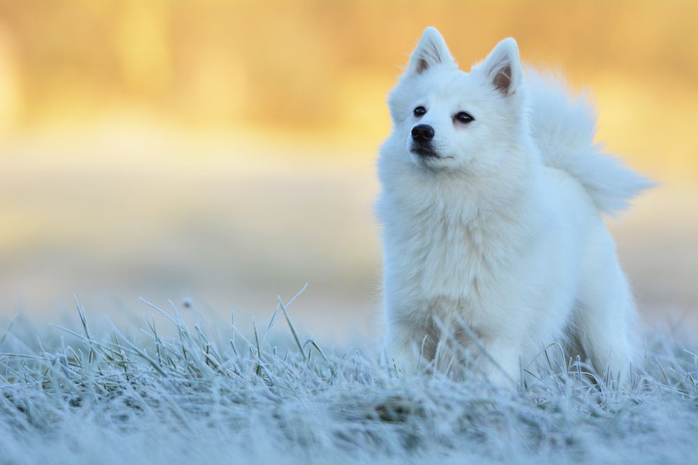 Small White Dog Breeds Puppies All Dog Breeds White Dog Breeds Small Mixed Breed Dogs Mixed Breed Dogs