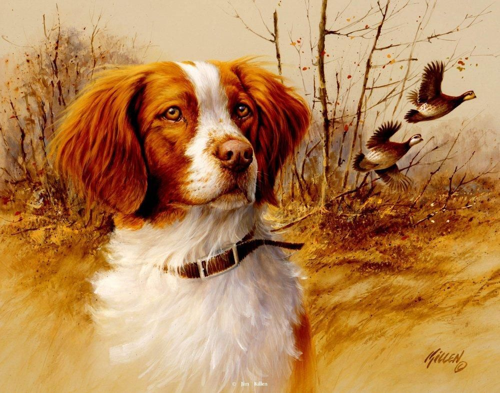 James Killen In The Field Brittany Spaniel S N Print Dog Paintings Brittany Spaniel Dogs Spaniel Art