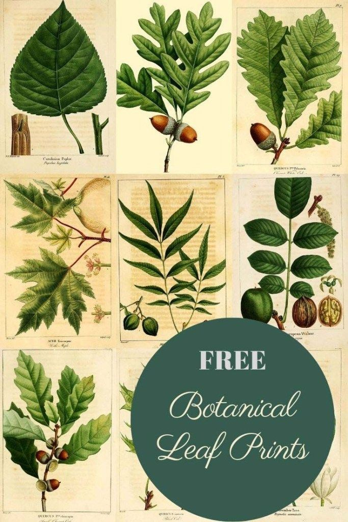 Wonderful Antique Botanical Leaf Prints From The Forest