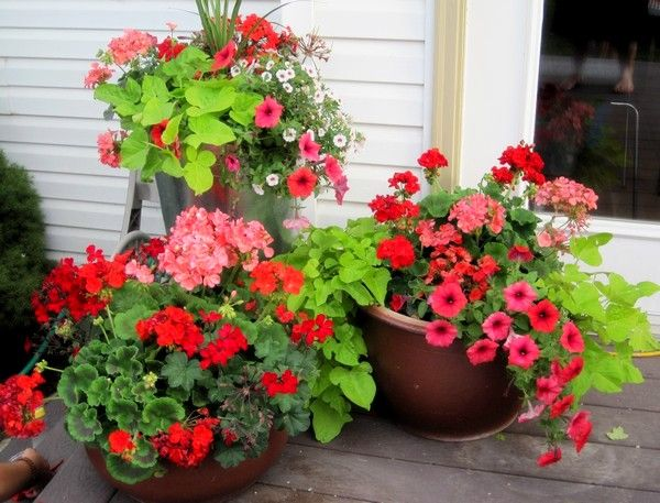 Outdoor decoration ideas for 20 or less flower petunias and gardens - Potted gardentricks beautiful flowers ...