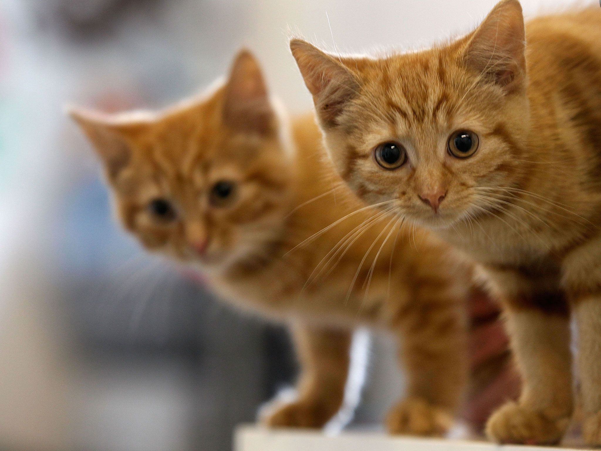 Why you should never hug your cat Cute cats, Animals