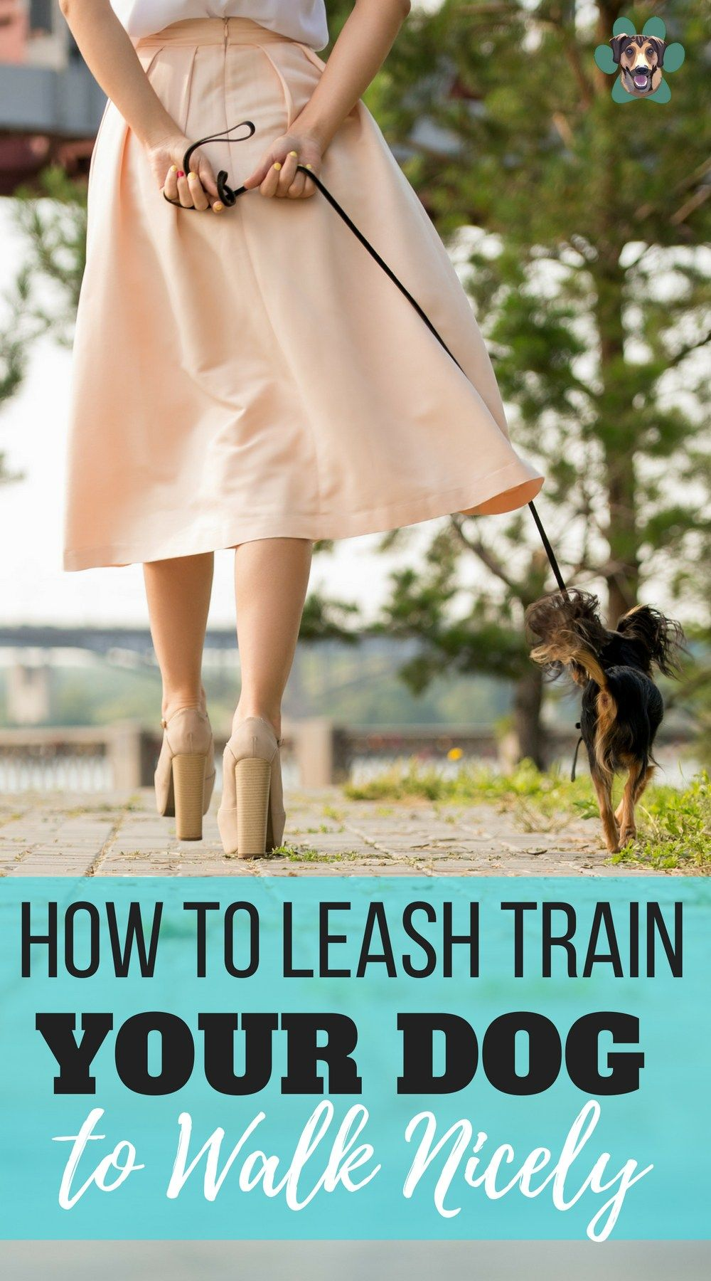 How to train a dog to heel and walk nicely on a leash