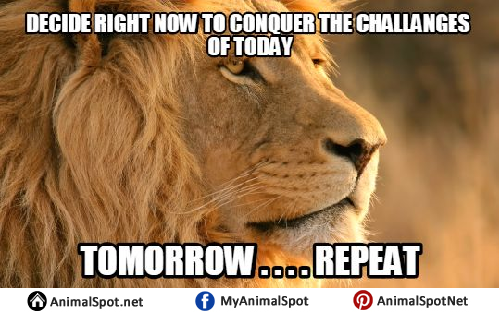 Big Lion Meme