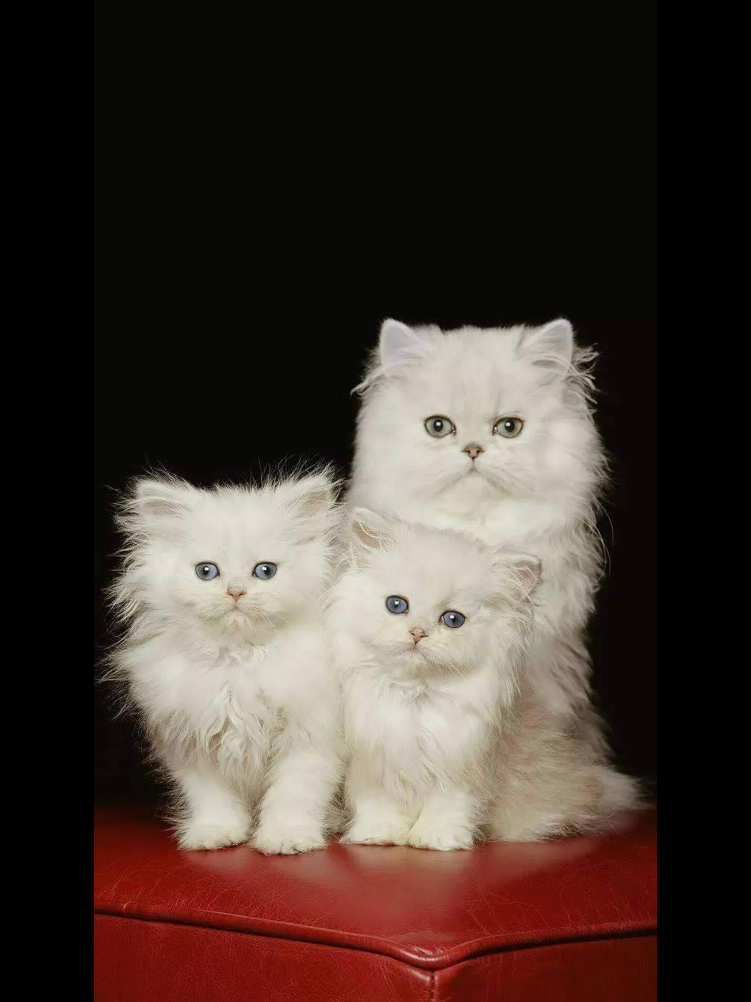 Pin By Barbara Stokley On Cats And Kittens Cats Pretty Cats Cute Cats