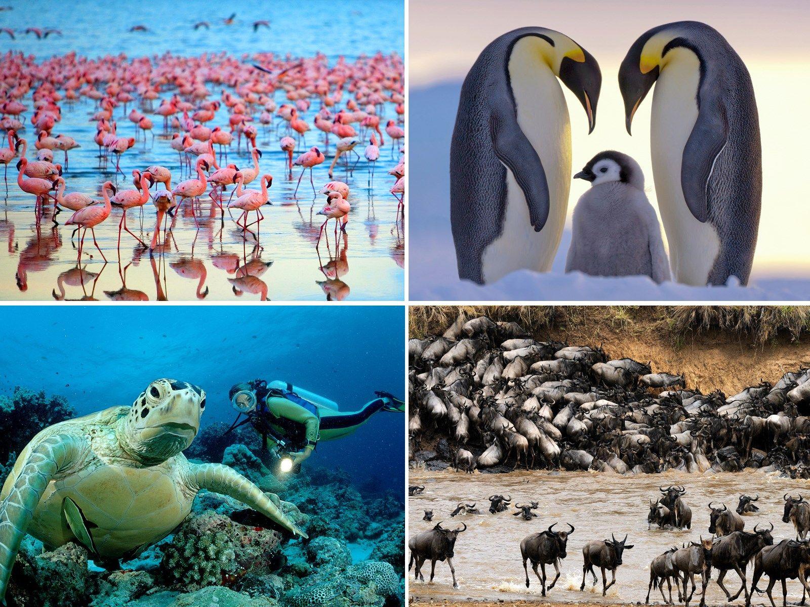 Asombrosas migraciones de animales