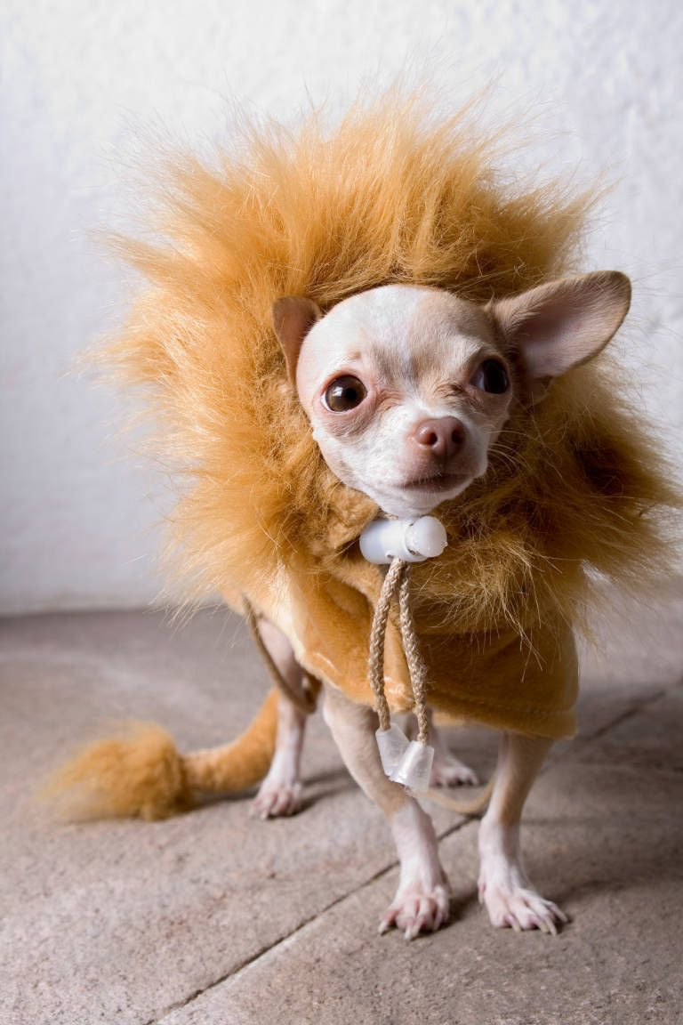 29 Pet Halloween Costumes So Cute You Ll Cry Pet Halloween